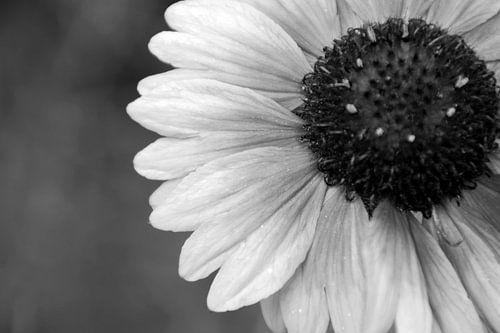 GARDEN FLOWER - BLACK AND WHITE