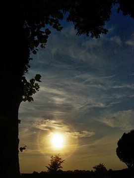 DSC01242_boom en zonsondergang. van H.m. Soetens