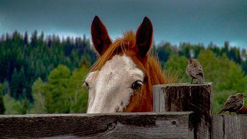 Paardenhoofd van Karen de Geus
