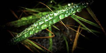Waterdruppel op grasspriet von Gerco Stokvis