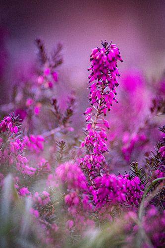 Blumen und Pflanzen im Frühling