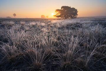 Mistige zonsopkomst op de Veluwe met rijp van Rick Kloekke