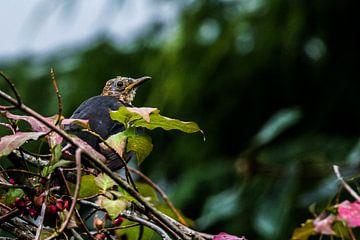 Nieuwschierige vogel van Cor Pot