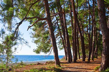 Une forêt de pins au bord de la mer bleue dans la légendaire Colchide. sur Michael Semenov