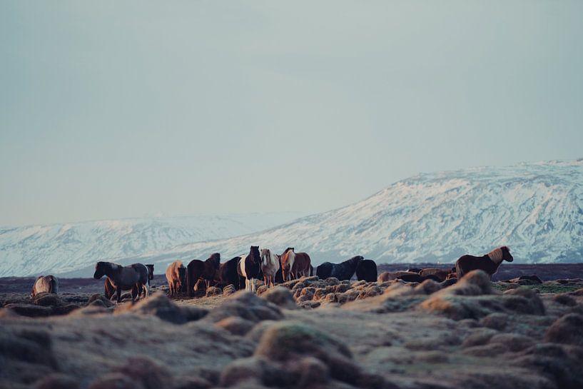 Icelandic Horses II van Pascal Deckarm