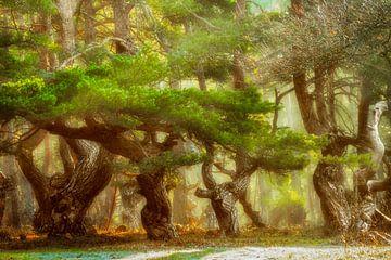 Kiefernwald umspielt von Sonnenstrahlen von Lars van de Goor