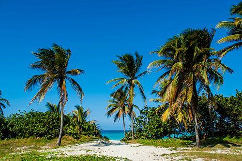 Stranddoorgang met palmbomen, beach