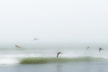 Vögel über dem Strand von Eddy Westdijk