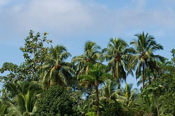 Palmen in regenwoud Costa Rica van Mirjam Welleweerd