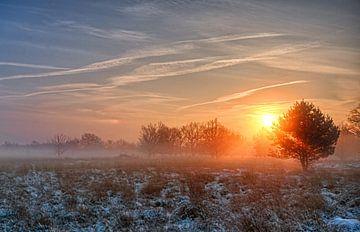 Foggy sunrise 2 von Natascha IPenD