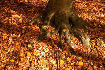 Herfstbladeren von Ger Mestrum