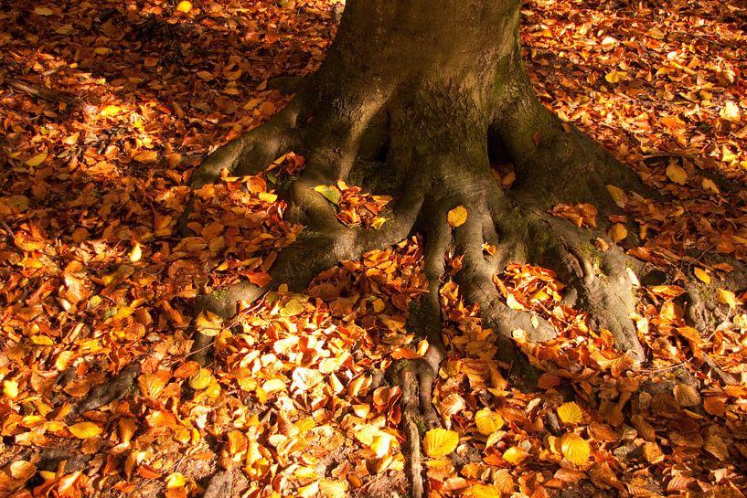 Herfstbladeren van Ger Mestrum