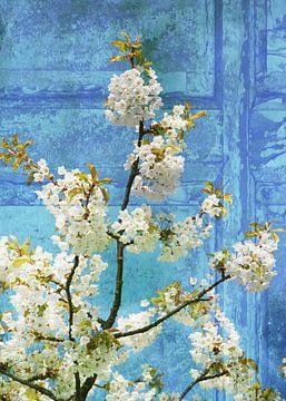 Kirschblüten van Martina Fornal
