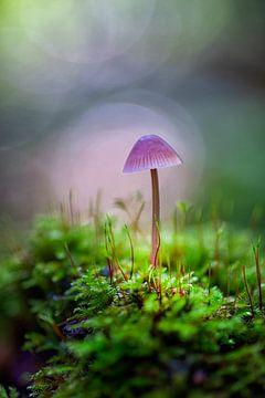 Pilz zwischen dem Moos von Coby Bergsma