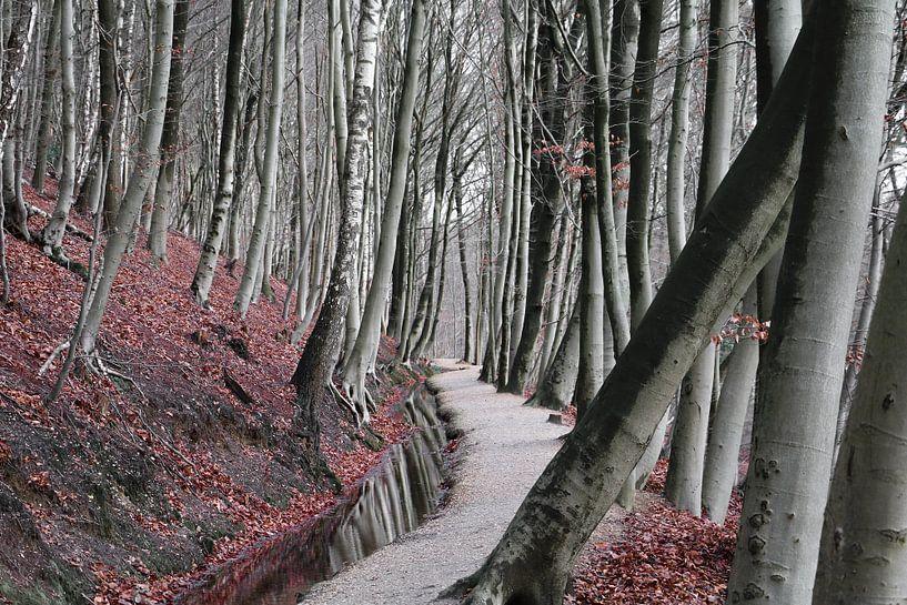 Winter bos van Lily Ploeg