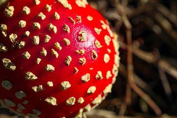 rood met witte stippen van Marieke Funke