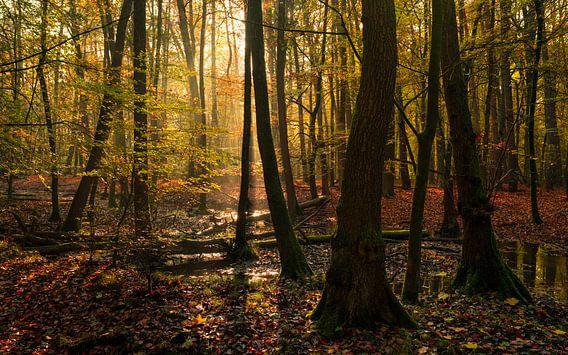 Moeras schoonheid van Joris Pannemans - Loris Photography