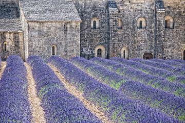 cloister-lavender van Joachim G. Pinkawa