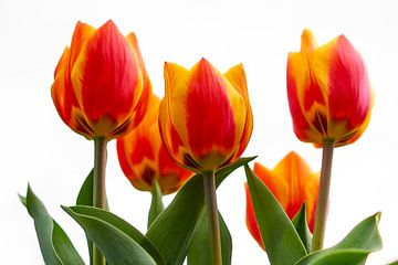 Roodgele tulpen van Ad Jekel