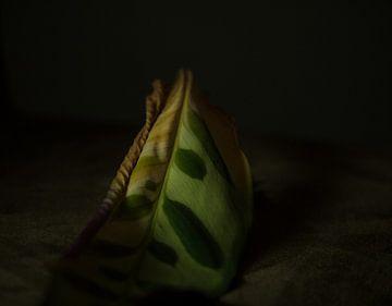 Still Life-Leaf van Wendy Drent