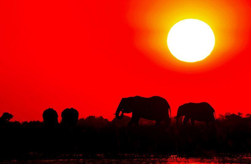 Elephants evening in Africa van W. Woyke