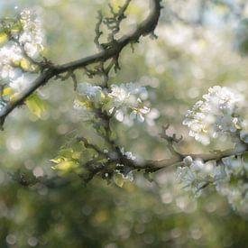 bloesem van Ria Bloemendaal