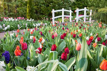 Verschiedene farbige Tulpen mit weißen Brücke in einem Park in Holland sur Ben Schonewille