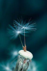 Dandelion Dancers
