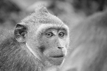 Affe in Bali von Aukelien Minnema