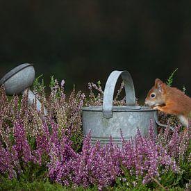 écureuil curieux sur Ina Hendriks-Schaafsma