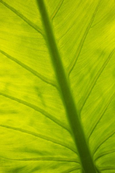 Blatt Natur von Katrin Engl
