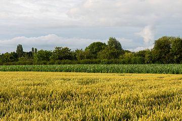 Gouden koren van Werner Lerooy