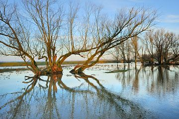 Biesbosch Waterboom van Willem van Leuveren Fotografie