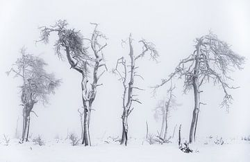 Un hiver brûlant sur Joris Pannemans - Loris Photography