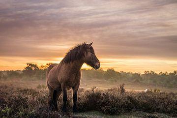 Wild horses van Wilko Ketelaar