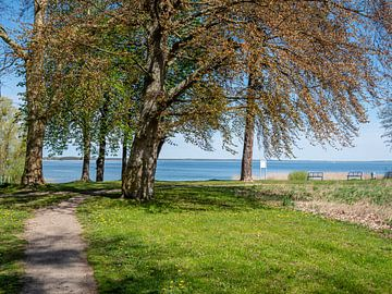 Blick auf einen See an der Mecklenburgische Seenplatte von Animaflora PicsStock