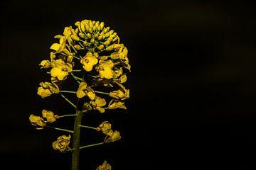 Analoge lens bloemen van Johnny Flash
