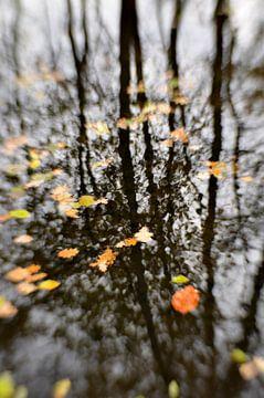 Herfstige beek van Marian Steenbergen
