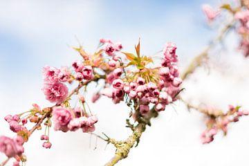 Blüte von Coby Zwartbol