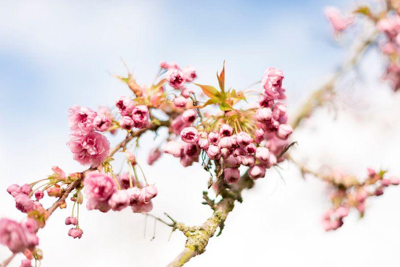 Bloesem lente van Coby Vriens