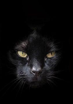 Gezicht van zwarte kat met geel/groene ogen tegen een donkere achtergrond van Hans Post