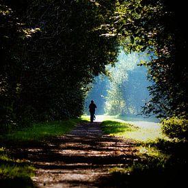 Chemin forestier sur Jan van der Knaap