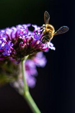 Abeille sur une fleur sur Nynke Altenburg