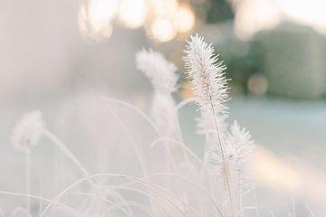 Federn im Winter | Reif in der Morgensonne | Naturfotografie Wandkunst von Milou van Ham
