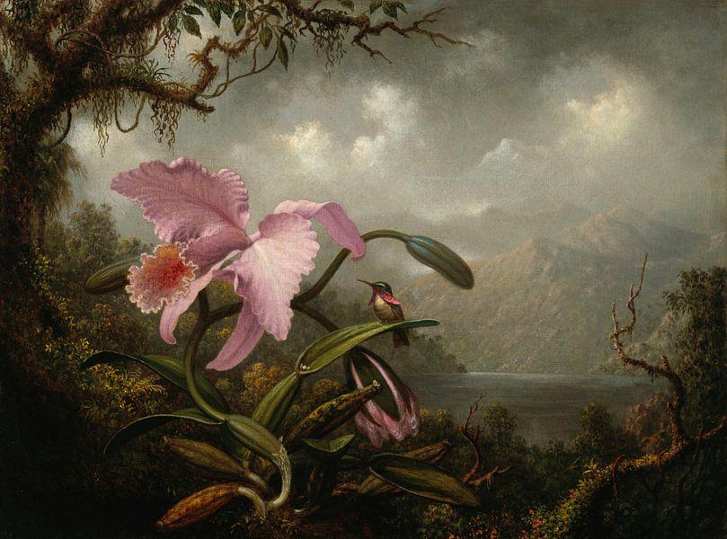 Orchidee en kolibrie, Martin Johnson Heade... van Meesterlijcke Meesters