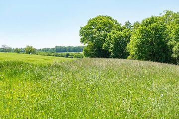 Frühlingslandschaft in Hohenlohe von Achim Prill