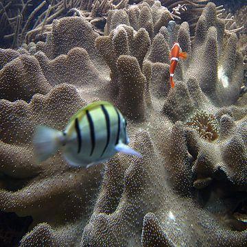 Aquarium van Mario de Lijser