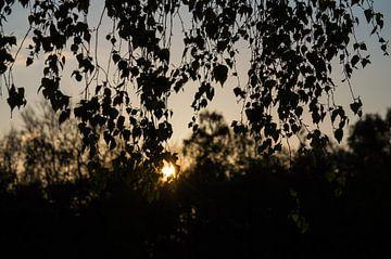Berk voor de zon von Onno van Kuik