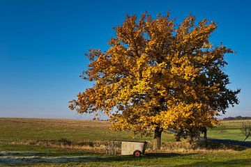 A lime tree in autumn van Gunter Kirsch