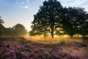 Goldener Glanz von Koen Boelrijk Photography